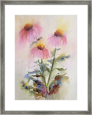 Pretty Coneflowers Framed Print by Bette Orr