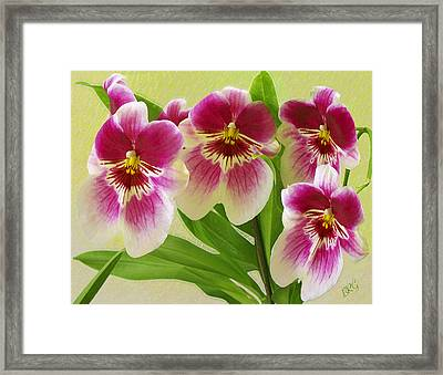 Pretty Faces - Orchid Framed Print by Ben and Raisa Gertsberg
