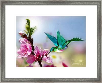 Pretty Hummingbird Framed Print by Morag Bates