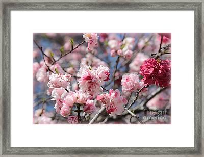 Pretty In Pink Framed Print by Carol Groenen