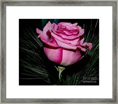 Pretty In Pink Framed Print by Gail Matthews