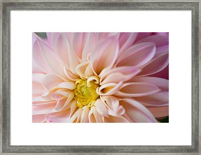 Pretty In Pink Framed Print by Kim Aston