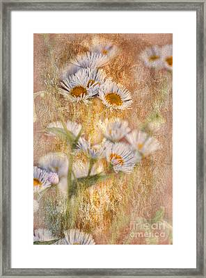 Pretty Little Weeds IIi Framed Print by Debbie Portwood