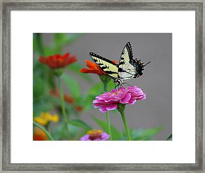 Pretty On Pink Framed Print by Lorna Rogers Photography