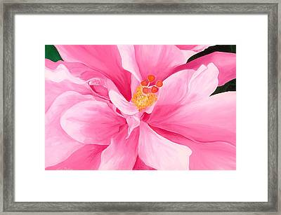Pretty Pink Hibiscus Painting Framed Print by Lisa Bentley