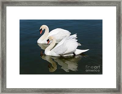 Pretty Swan Pair Framed Print by Carol Groenen