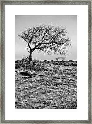 Prevailing Bw Framed Print by JC Findley