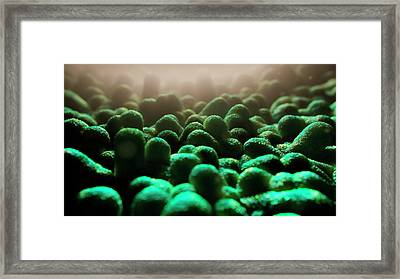 Prevotella Bacteria Framed Print by Thierry Berrod, Mona Lisa Production