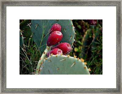 Prickly Pear Cactus Framed Print by M E Wood