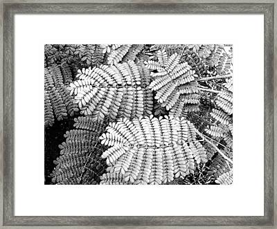 Pride Of Barbados Framed Print by Wendy J St Christopher