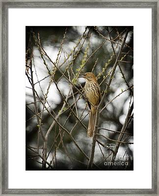 Pride Of Georgia Framed Print by Cris Hayes