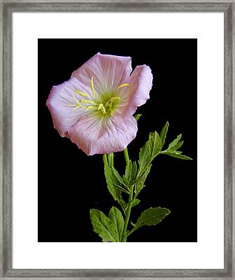 Prim And Proper Framed Print by David and Carol Kelly