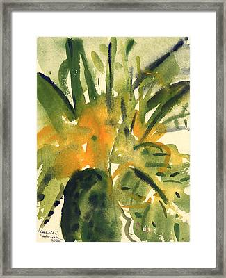 Primroses Framed Print by Claudia Hutchins-Puechavy