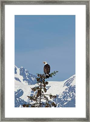 Prince William Sound, Alaska, A Bald Framed Print by Hugh Rose