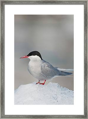 Prince William Sound, Alaska, An Arctic Framed Print by Hugh Rose