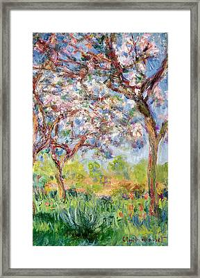 Printemps A Giverny Framed Print by Claude Monet