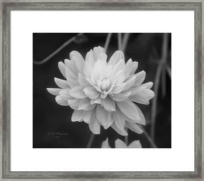 Prissy In Black And White Framed Print by Jeanette C Landstrom