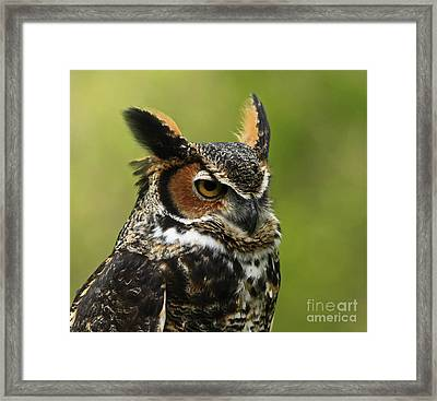 Profile Of A Great Horned Owl Framed Print by Inspired Nature Photography Fine Art Photography