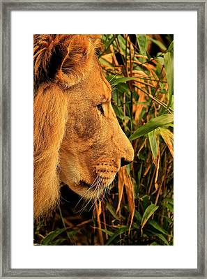Profiles Of A King Framed Print by Laddie Halupa