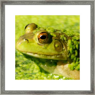 Profiling Frog Framed Print by Optical Playground By MP Ray