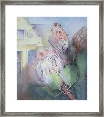 Protea At Stellenbosch Framed Print by Karen Armitage
