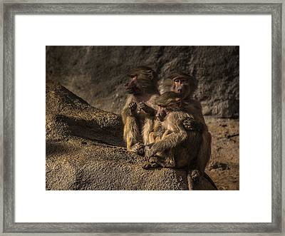 Protection From The Family Framed Print by Chris Fletcher