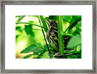 Proud Bird Framed Print by Ethan Allen