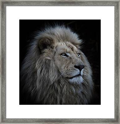 Proud Lion Framed Print by Louise Wolbers
