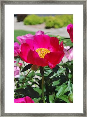 Proud To Be Pink Framed Print by Billie Colson