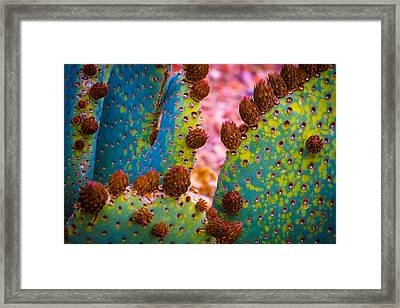 Psychedelic Cactus Framed Print by Glenn DiPaola
