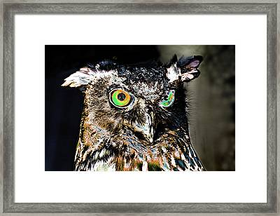 Psychedelic Owl Framed Print by Peter Lloyd