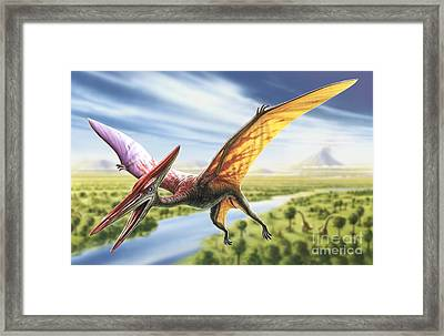 Pterodactyl Framed Print by Adrian Chesterman