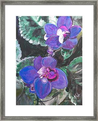 ptg   African Violets Framed Print by Judy Via-Wolff