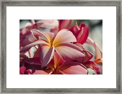 Pua Melia Ke Aloha Maui Hikina Framed Print by Sharon Mau