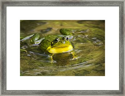 Puddle Jumper Framed Print by Christina Rollo