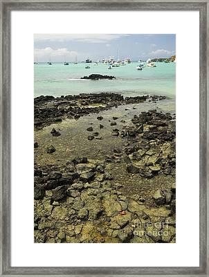 Puerto Ayora Framed Print by William H. Mullins