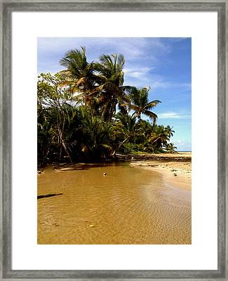 Puerto Rican Dream  Framed Print by Danielle  Broussard