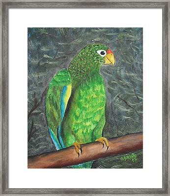 Puerto Rican Parrot Framed Print by Gloria E Barreto-Rodriguez