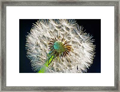 Puff Explosion  Framed Print by Don Durante Jr