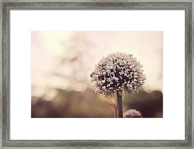 Puff Framed Print by Heather Applegate