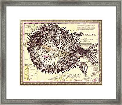Puffer Fish Framed Print by Dawn Rosendahl