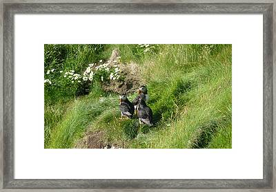 Puffin Meeting Framed Print by George Leask