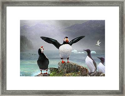 Puffin Pano Framed Print by R christopher Vest