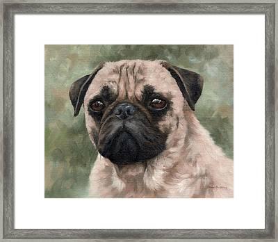 Pug Portrait Painting Framed Print by Rachel Stribbling
