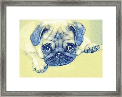 Pug Puppy Pastel Sketch Framed Print by Jane Schnetlage