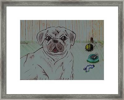 Pug Yard Framed Print by Shaunna Juuti