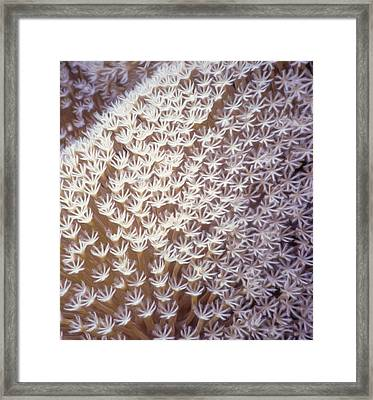Pulsing Exenia Coral Framed Print by Roy Pedersen