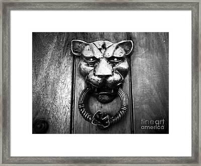 Puma Framed Print by John Rizzuto