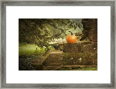 Pumpkin Framed Print by Amanda And Christopher Elwell