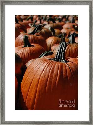 Pumpkin Harvest 1 Framed Print by First Star Art